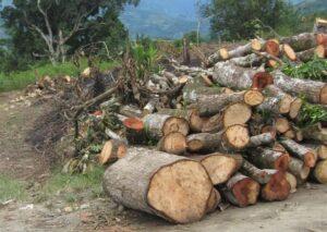Los bosques tienen una importancia vital para el mantenimiento de la vida en la tierra y desempeñan un papel clave en la lucha contra el cambio climático